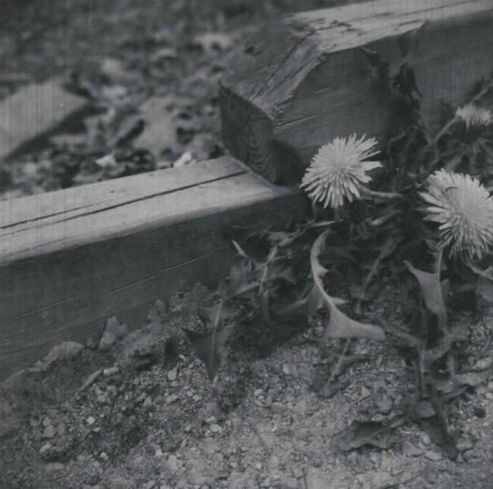 Nature Walk - B&W Medium Format Film