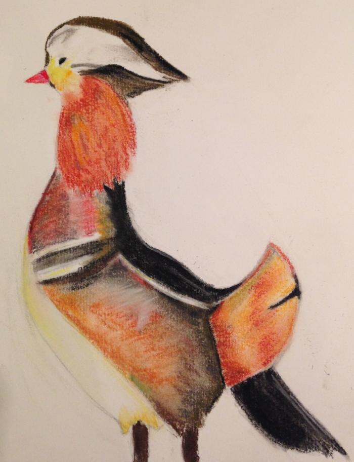 Mandarin Duck - Soft Pastels on Paper